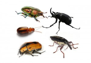 food beetles moths control